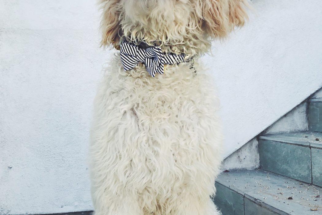 smart dogs training los angeles
